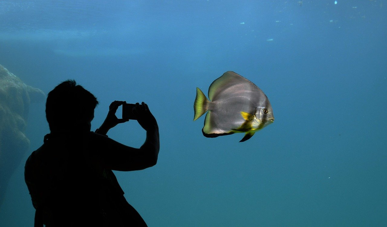 Fundraising for Aquariums